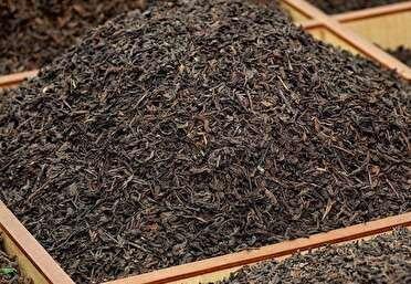کشف بیش از۳۰۰۰ تن چای فاسد در لنگرود