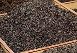 افزایش تولید چای خشک در کشور