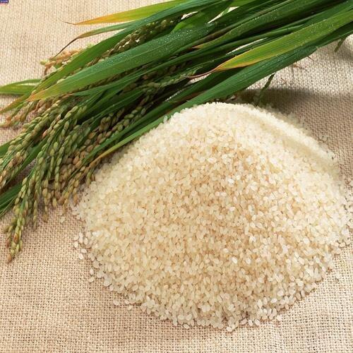 احتمال افزایش شکستگی برنج شالیزارهای صومعه سرا