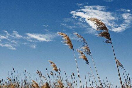 وزش بادگرم در راه گیلان