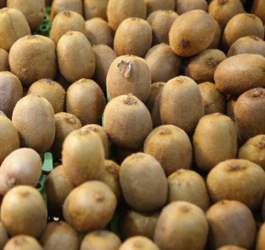 ۵٠ درصد کیوی گیلان صادر می شود.