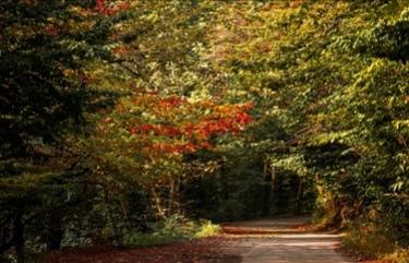 پاییز جنگل دیلمان – گیلان