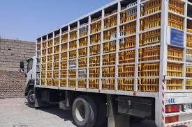 ۶دستگاه کامیون بدون مجوز حمل مرغ در رودبار توقیف شد.