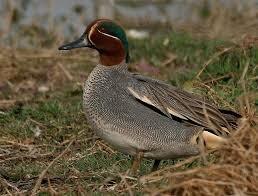 مشارکت و آگاهی بخشی مردم بومی حاشیه امنی را برای حفاظت از پرندگان مهمان فراهم کرده است.