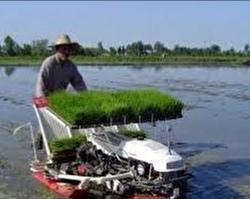 رشت بزرگترین تولید کننده برنج کشور است.